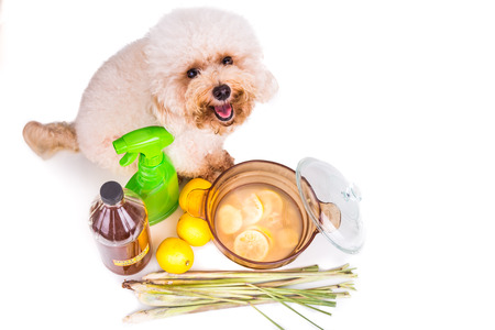 repel: Apple cider vinegar, lemon and lemongrass home remedy, safe and effective formula to repel fleas from pets and odor neutralizer Stock Photo