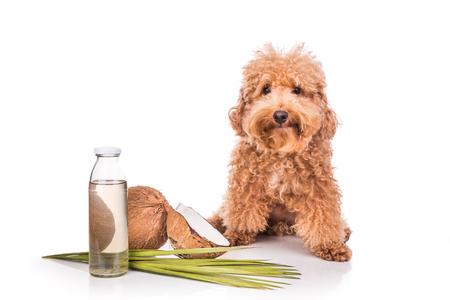 aceite de coco y las grasas son buenas pulgas y garrapatas y naturales repelentes de animales domésticos como perros, debido a ácido láurico.