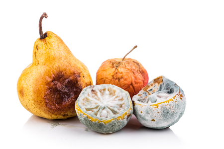 decomposing: Rotten, moldy and decomposing organic lemon, apple, pear on white background.  Can be recycled as organic waste.