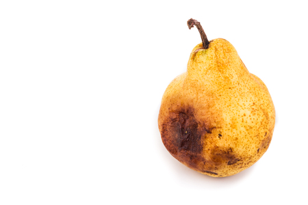 decomposing: Rotten and decomposing organic pear on white background