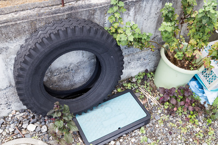 dengue: Used tires at garden traps rain water risk breeding ground for mosquito Stock Photo