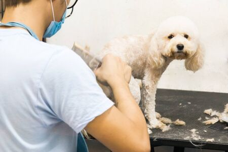 groomer: Groomer trim groom pet dog with comb in salon