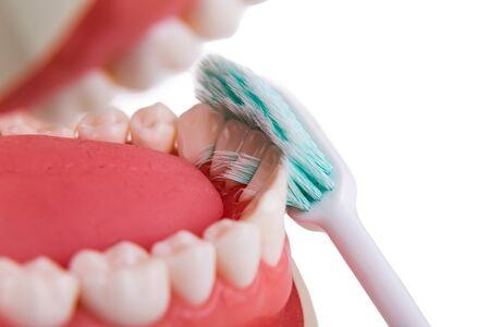 inbetween: Closeup demonstration on soft and slim bristle toothbrush brushing in-between teeth
