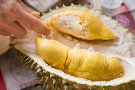 Hand picking yellow flash from husk of musang king durian variety 版權商用圖片 - 77607251