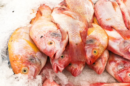Aquaculture farm fresh red tilapia snapper fish chilled on ice for sale in market Reklamní fotografie