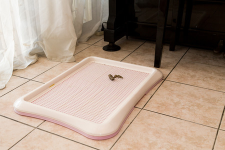 Pet dog Indoor training toilet tray with poop faeces on it