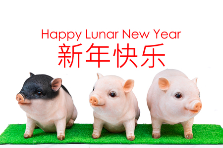 Three pig boar in white background with Happy Lunar New Year greeting text. Pig is 2019 Chinese New Year zodiac Banque d'images