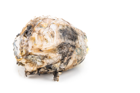 Closeup on rotten and moldy Chinese cabbage vegetable on white background