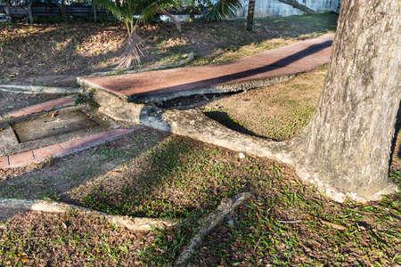 Big overgrown root from tree destroy pavement sidewalk