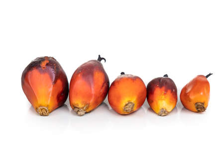 Oil palm fruits with different grade and sizes comparison