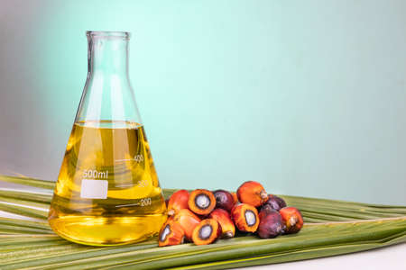 Oil palm fruits with biofuel in beaker in laboratory with green backgound
