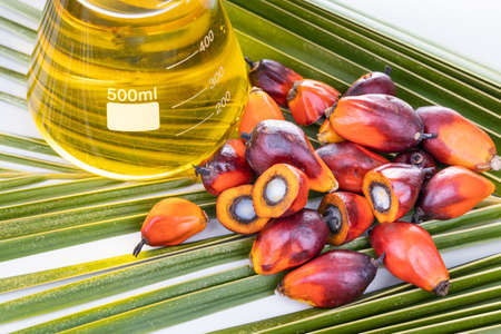 Close-up on Oil palm fruits with biofuel in beaker in laboratory 写真素材