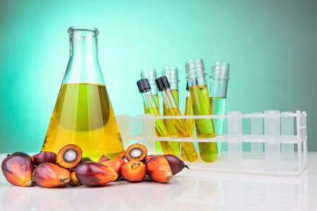 Oil palm fruits with distilled in beaker test tubes in laboratory.