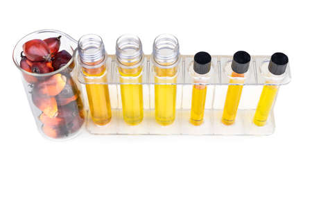 Oil palm fruits with biofuel in beaker test tubes in laboratory. 写真素材