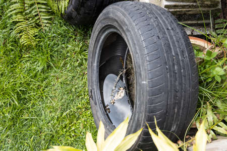 Abandoned tyre outdoor with still water from rain condusive place for aedes mosquito breeding. Selective focus on water.