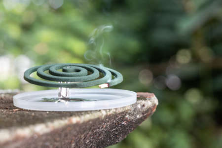 Closeup on traditional mosquito repellent coil emit smoke to repel mosquito outdoor
