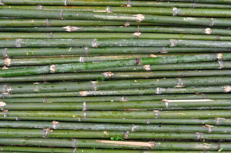Green bamboo fence in Bangkok, Thailand. photo