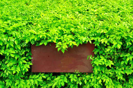 green leaves with brown sign Stock Photo - 9704055