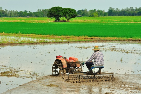 farmer ride rice tractor for preparing the ground for rice plantation. Stock Photo