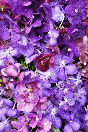 Pattern of purple orchid photo