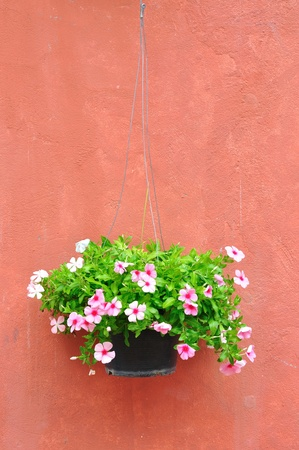 Flower pot with brown wall  photo