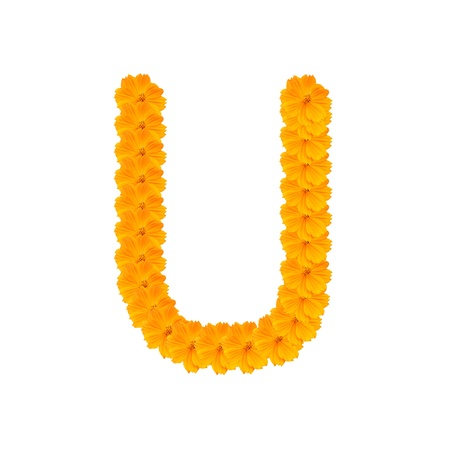 clippng: alphabet U from yellow and orange flowers. Isolated on white background. With clipping path