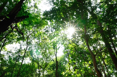 Sunshine in the wood with green leaves