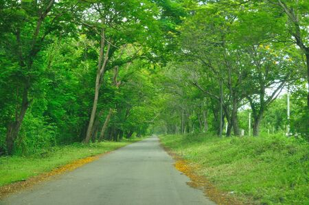 Country road running through tree alley. photo