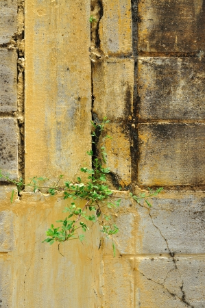 Cement wall with plant photo