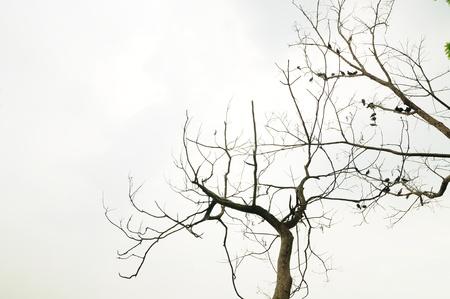 arbre mort: Branche d'arbre mort