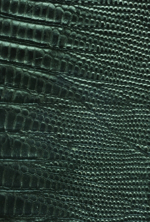 Close up texture of Black lizard leather for use as Background photo