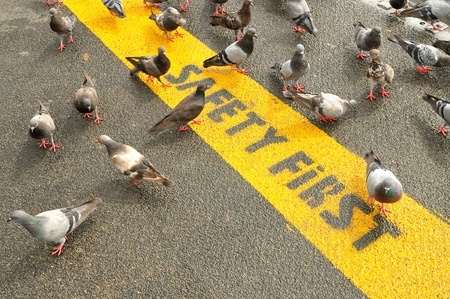 road worker: Safety First sign on caution strip surrounded by Pigeons Stock Photo