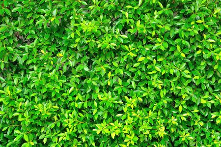 assort: Green leaves wall background for use as Web Illustration