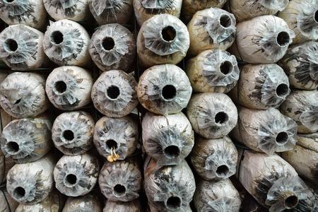 sporen: Row of Abandoned Spore Bag in Pilzhaus