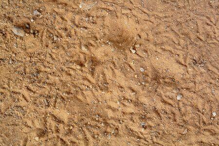 vogelspuren: Texture Hintergrund der Sand mit Vogel-Footprint.