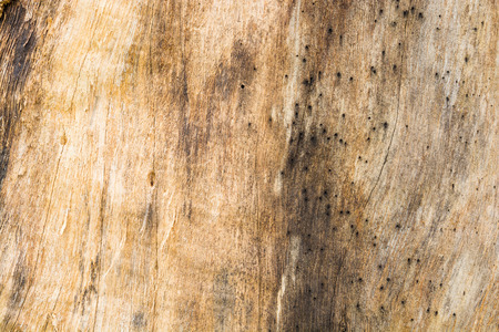 Abstract Texture Pattern Background of Brown Wood Bark of Natural Tree Timber as Antique or Retro style Decoration