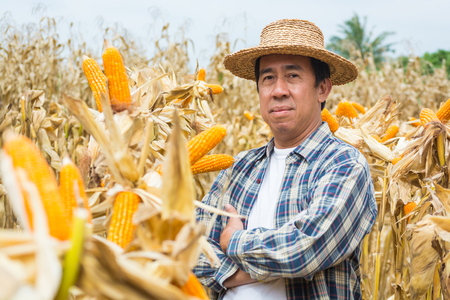Asian Male Farmer Stand and Smile in Sweet Corn Cob Nature Field or Farm as Agriculture Lifestyle Concept. Standard-Bild