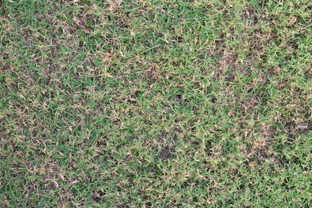 level playing field: Grass surface