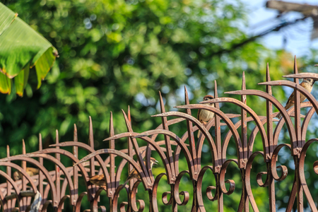 upright row: Arrow sharp spike Fence for protected from Burglar Stock Photo