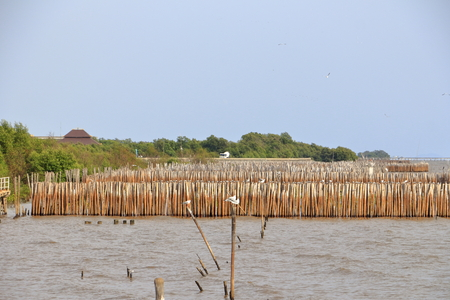 Mangrove forest in the tropical and Bamboo stick in the sea, blue sky for nature conservation. Stock Photo