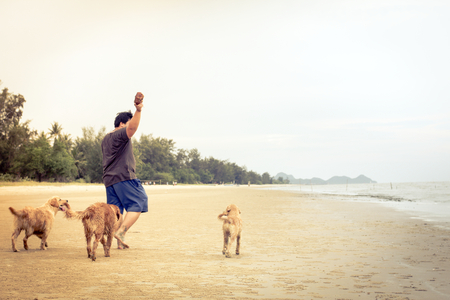 Man Playing With Dog Golden Retriever On The Beach , Filtered images color effect photo