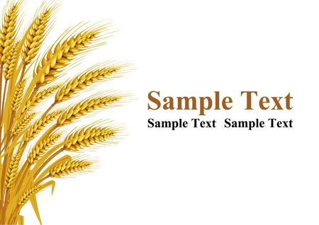 Wheat on the white background in the left hand corner has space for text input. Vector illustrations