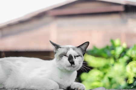 white cat with nature bokeh abstract background