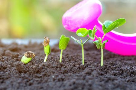 Sapling growing from the ground Standard-Bild - 120311705