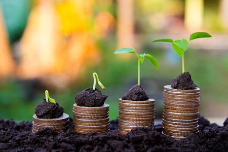 background Rosnąca roślina pieniędzy na monety biznes Finanse i inwestycje Concep