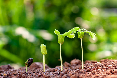 Background image of seedlings growing from fertile soil with morning sunshine Stok Fotoğraf