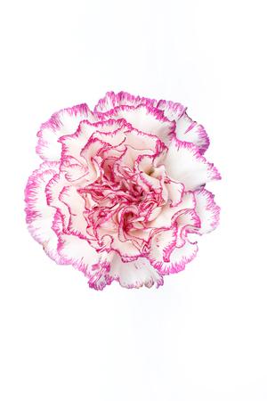 deep focus: Carnation. Deep focus. No dust. No pollen.