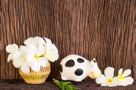 chased: White Frangipani Tropical Flower, Plumeria Flower. Stock Photo