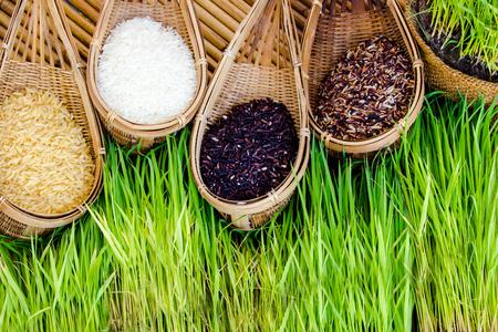 hot asian: Райс посевные площади Горячий азиатский рис является основным продуктом питания.