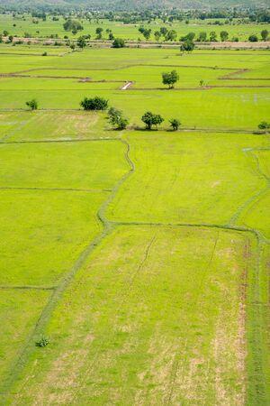 vertical orientation: Thai countryside with multiple rice paddies, in vertical orientation. Kanchanaburi, Thailand. Stock Photo